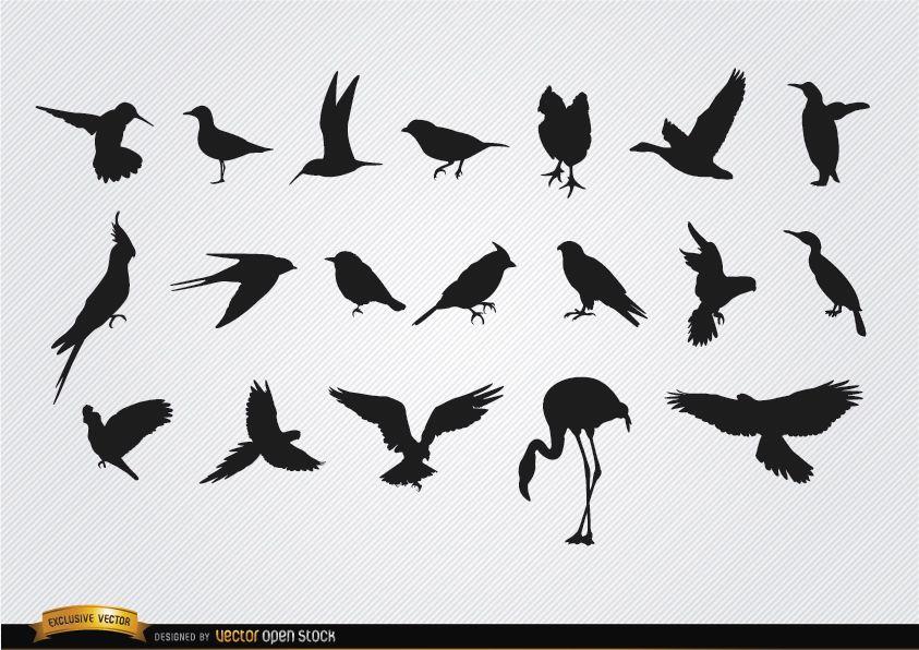 Conjunto de siluetas de especies de aves