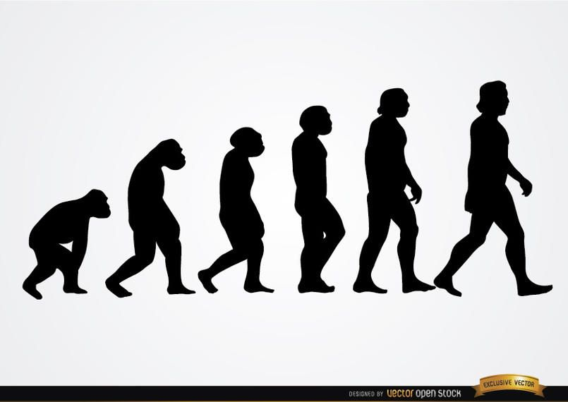 Human evolution silhouettes