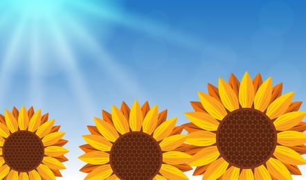Realistic Sunflowers on Blue Background