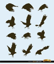 Flying bird motion silhouettes