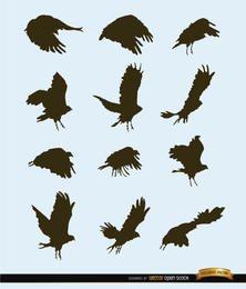 Silhuetas de movimento de pássaros voando