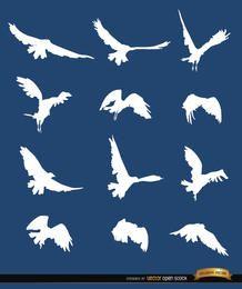 Silhuetas de seqüência de pássaro voador