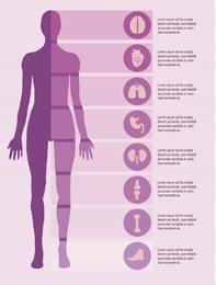 Elementos infográficos del cuerpo femenino.
