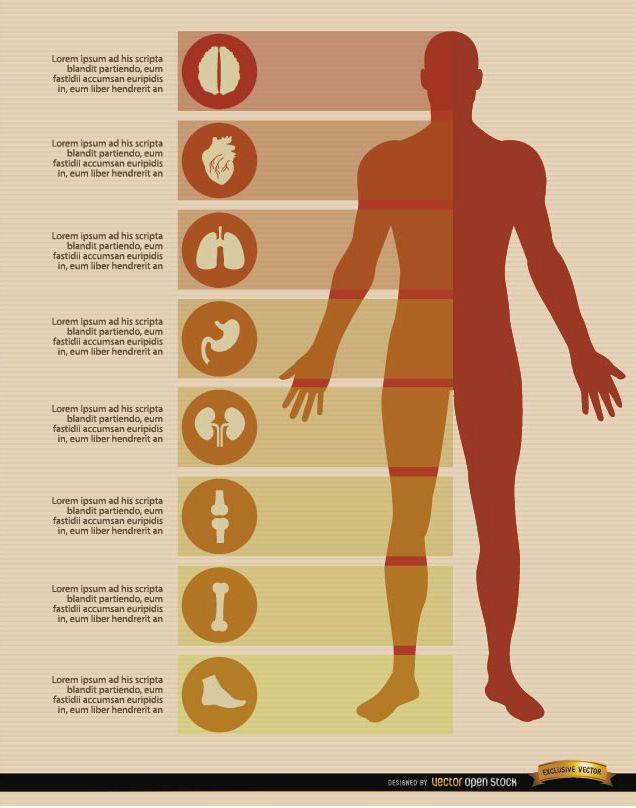 Elementos de infografías del cuerpo masculino