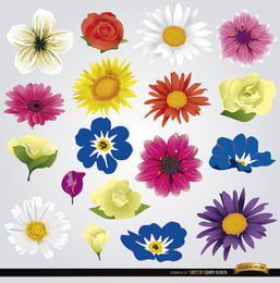 18 species of flowers
