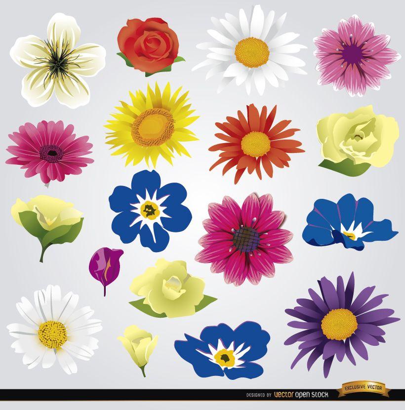 18 esp?cies de flores