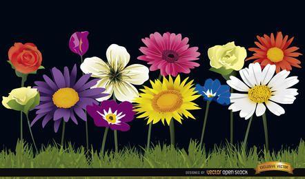Varias flores sobre fondo de hierba