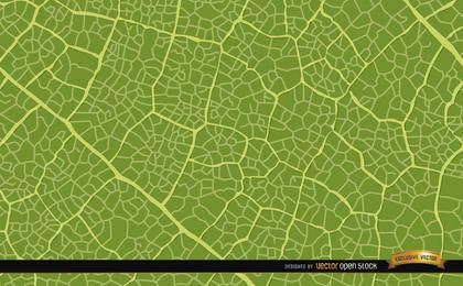 Grünes Blatt-Beschaffenheits-Hintergrund