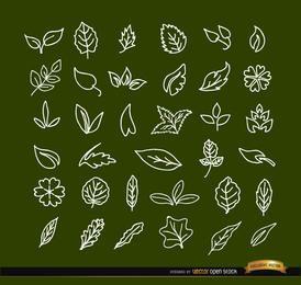 36 hand drawn leaves