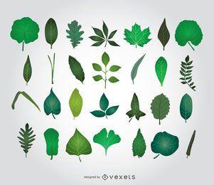 Ilustrações de folhas verdes