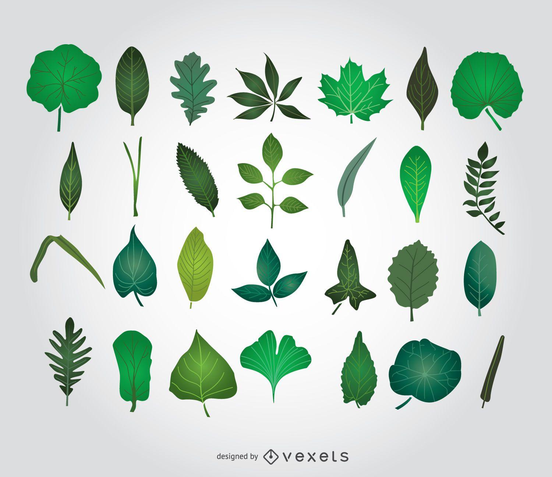 Grüne Blätter Abbildungen