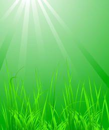 Hierba con luz