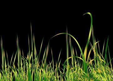 Grass black