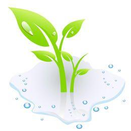 Planta con agua