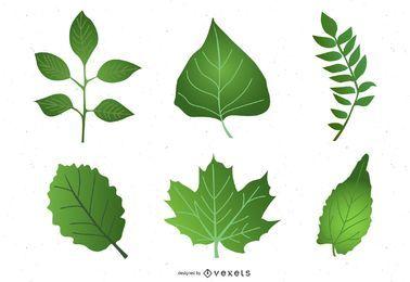 Conjunto de hojas