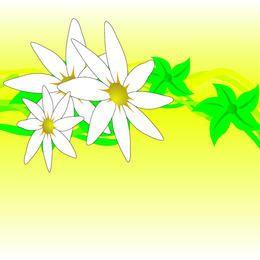 Diseño de flores blancas