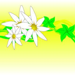 White Flower Design
