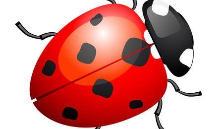 Cute ladybug or ladybird