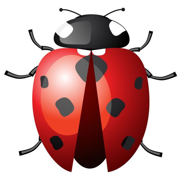 Ladybird with Spread Wings - Vector download