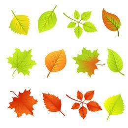 Hojas de otoño vector