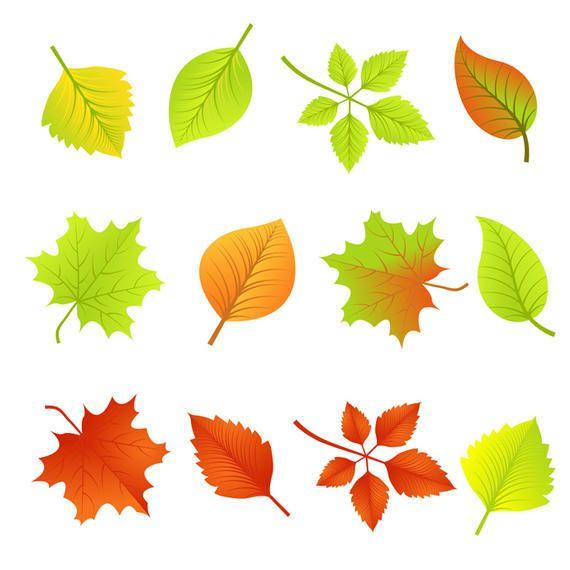 Vector hojas de oto o descargar vector - Descargar autumn leaves ...