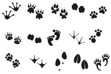 Pegadas de animais humanos