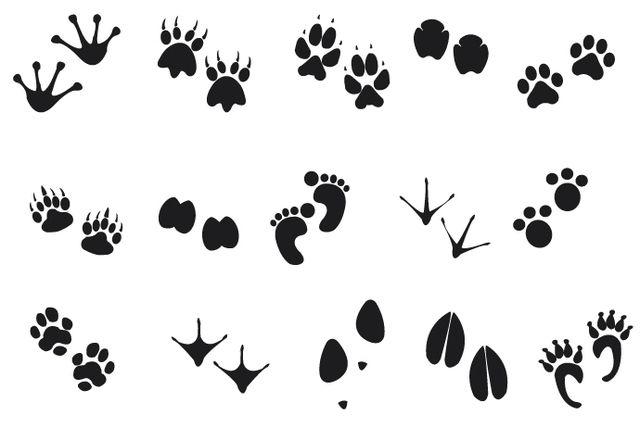 Huellas de animales humanos