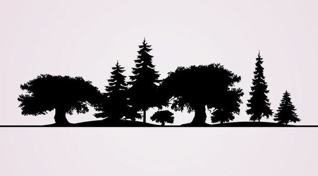 Silhuetas de árvores