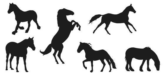 Silhuetas de cavalos