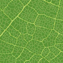 Grüne Blattbeschaffenheit
