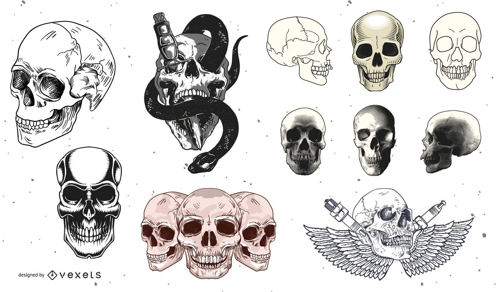 Colección de vectores de cráneo