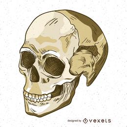 Ilustração das camadas do crânio