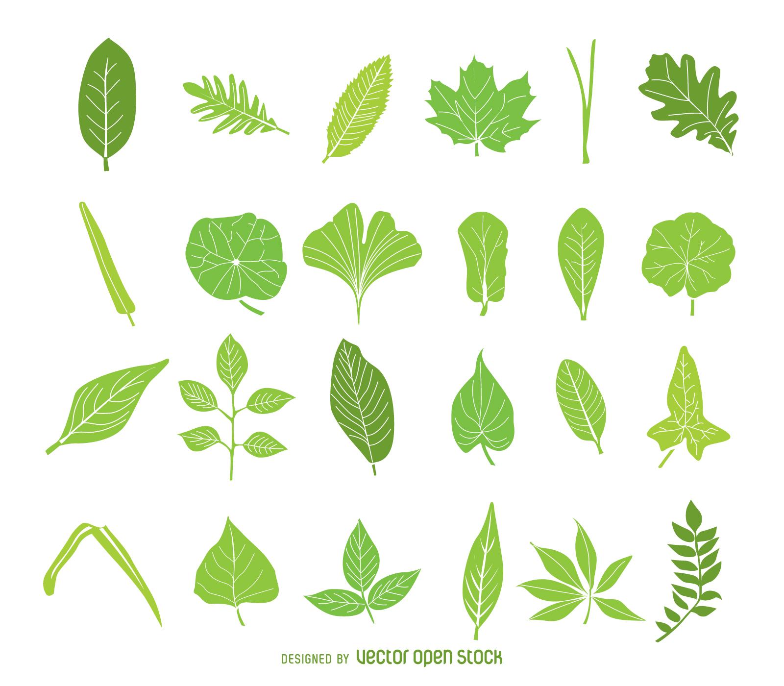 Paquete aislado de icono de hojas verdes