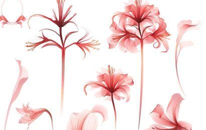 Vetores botânicos de primavera delicada