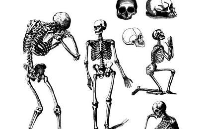 Conjunto de calaveras y esqueletos