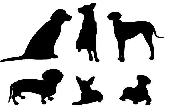 Premium Dog Services