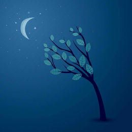 Mitternachtshimmel-Zusammenfassungsbaum
