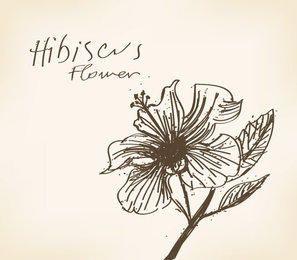 Tarjeta de flor de hibisco dibujada a mano