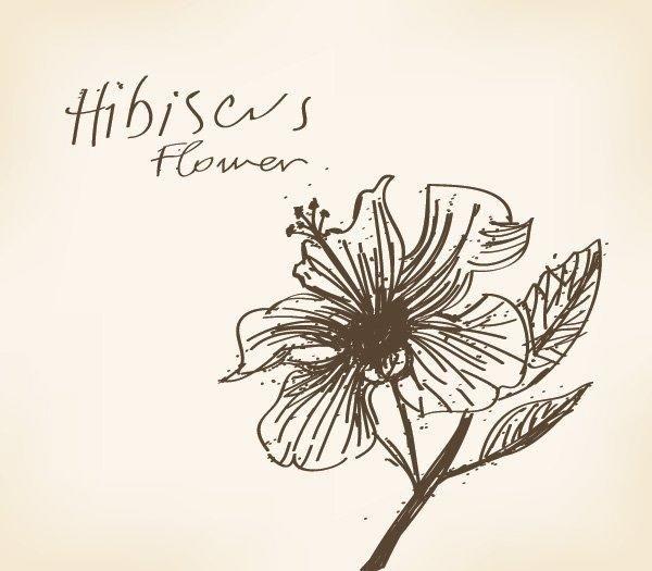 Hand Drawn Hibiscus Flower Card