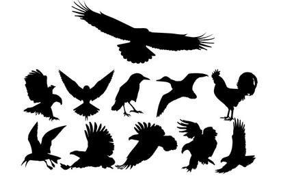 Set de siluetas de pájaros